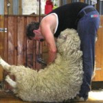 Wool prices ease slightly