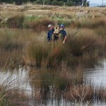 Gravel pit becomes wetland