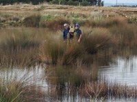 Recently WLG committee members erected three grey teal nest boxes.