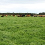 Summer safe dairy farm for sale