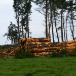 Potential for sawmilling byproducts