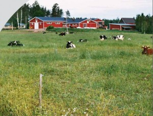 finnishfarm