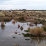 Views on establishing wetlands sought